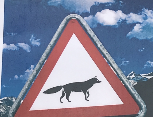 Fuchsjagd 2019